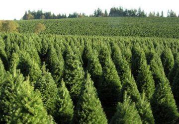 Arboles-de-Navidad-1280x720-750x422-1